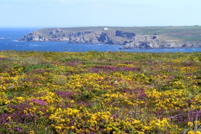 wild flowers at Pointe du Raz