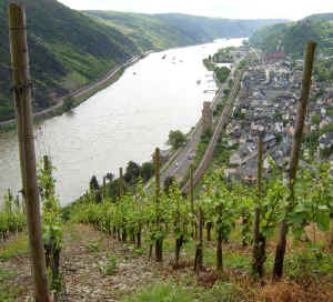 Oberwesel view from vineyards